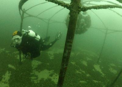"Discover Local Diving ""St Prex Plage"" Ismaël"